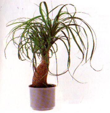 die sch nsten zimmerpflanzen der welt zimmerpflanze pflanze blumen gummibaum feige efeu. Black Bedroom Furniture Sets. Home Design Ideas