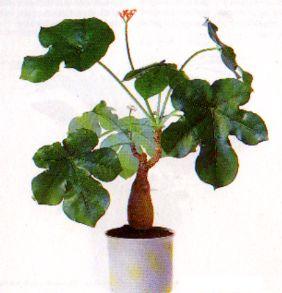 Die Schonsten Zimmerpflanzen Der Welt Zimmerpflanze Pflanze Blumen