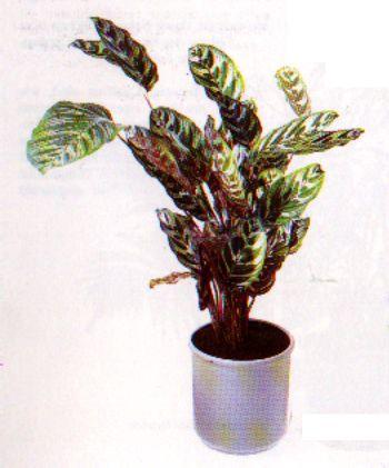 Schattige Zimmerpflanzen die schönsten zimmerpflanzen der welt zimmerpflanze pflanze blumen