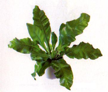 Die sch nsten zimmerpflanzen der welt zimmerpflanze for Fliegen in der erde von zimmerpflanzen